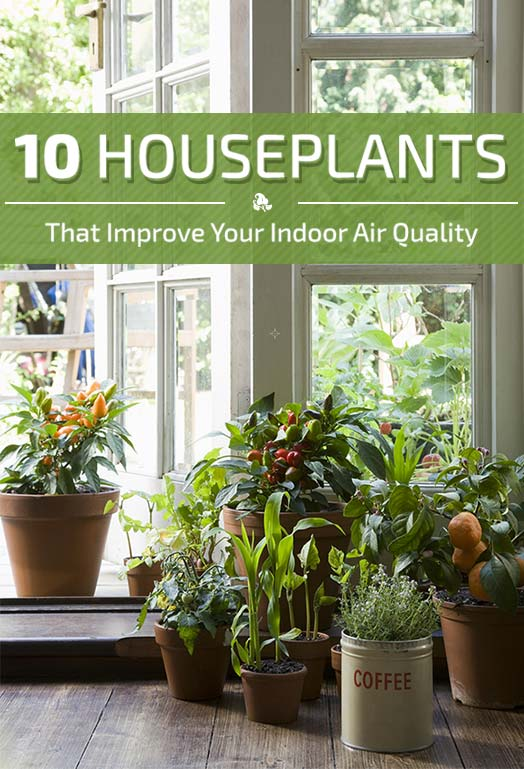 10 houseplants that improve indoor air quality for Nasa indoor plant list
